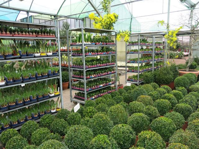 Visita a viveros shangai en madrid paisaje libre for Viveros plantas en temuco