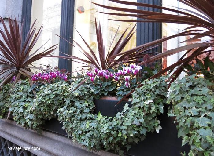 Plantas jardineras exterior perfect paisaje libre de Plantas jardineras exterior