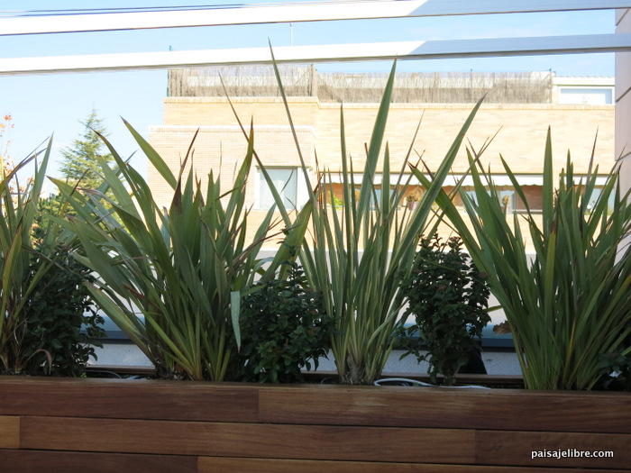 Las 6 Mejores Plantas De Sol Para Terrazas Y áticos Paisaje Libre