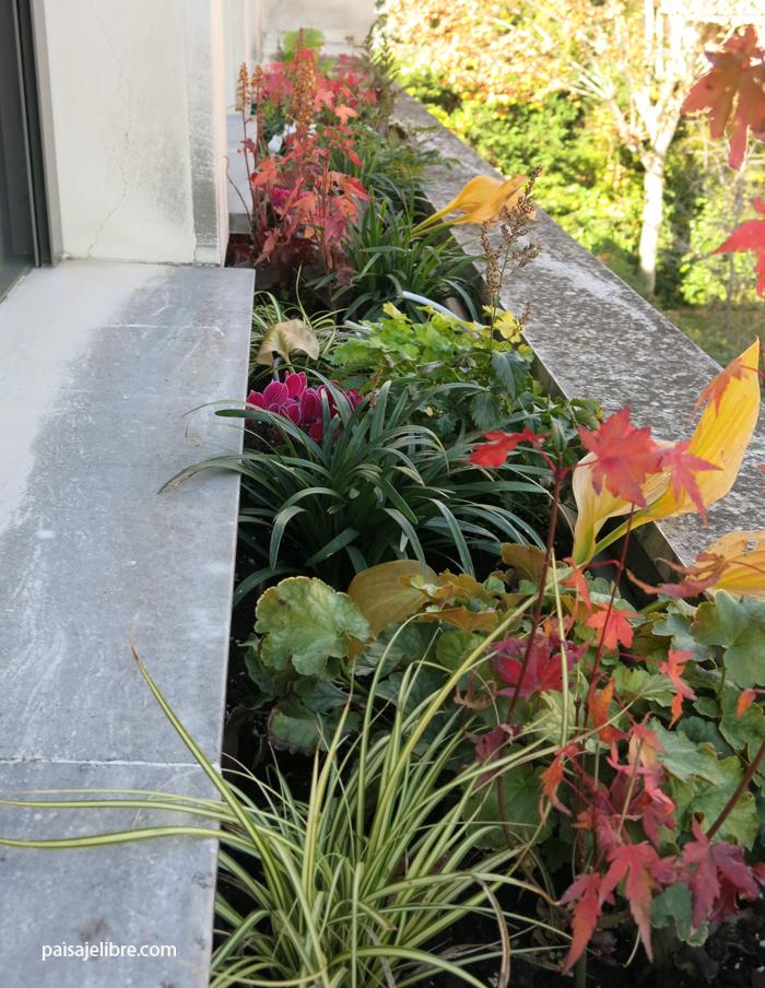 las 7 mejores plantas de sombra para jardineras paisaje
