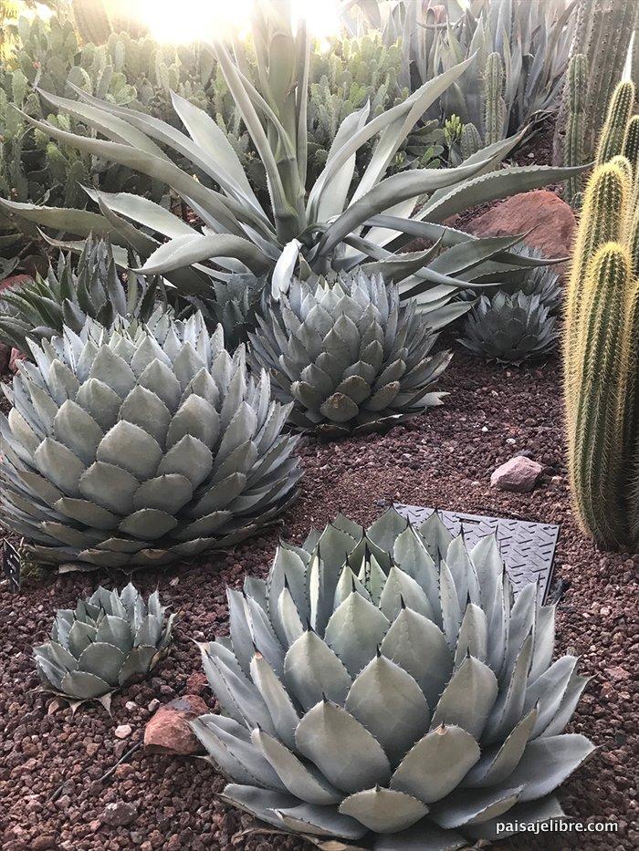 04 desert city jardin cactus madrid jpg paisaje libre for Jardin cactus madrid