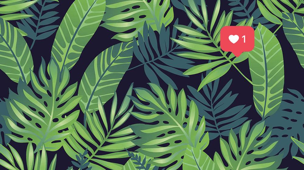 Las 7 mejores plantas de interior para tu hogar paisaje libre - Mejores plantas para interior ...